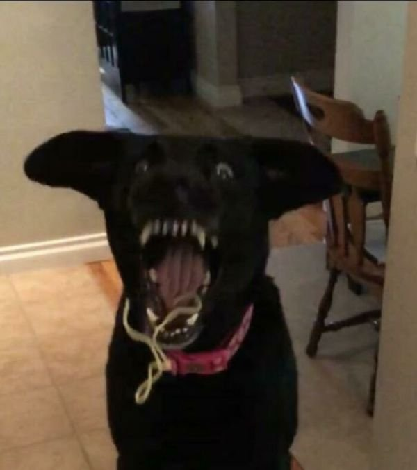 These Dogs Are Broken (43 pics)