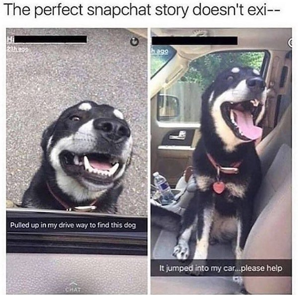 Funny Dogs (31 pics)
