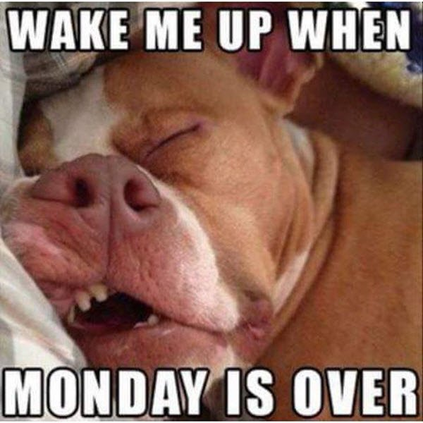 Monday Memes (34 pics)