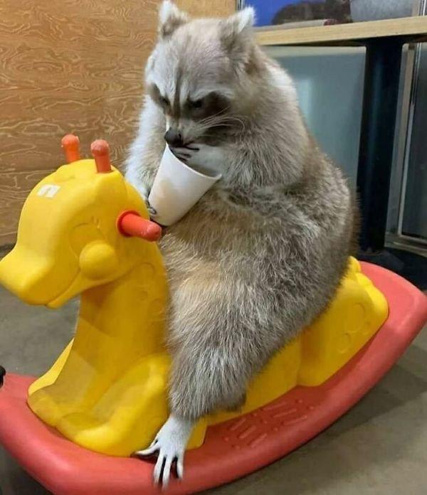 Funny Animals (48 pics)