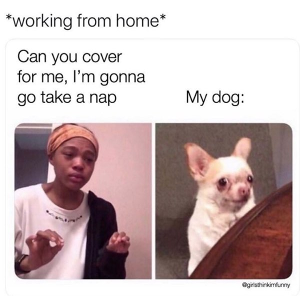 Work From Home Memes (25 pics)