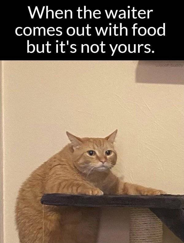 Random Funny Memes (49 pics)