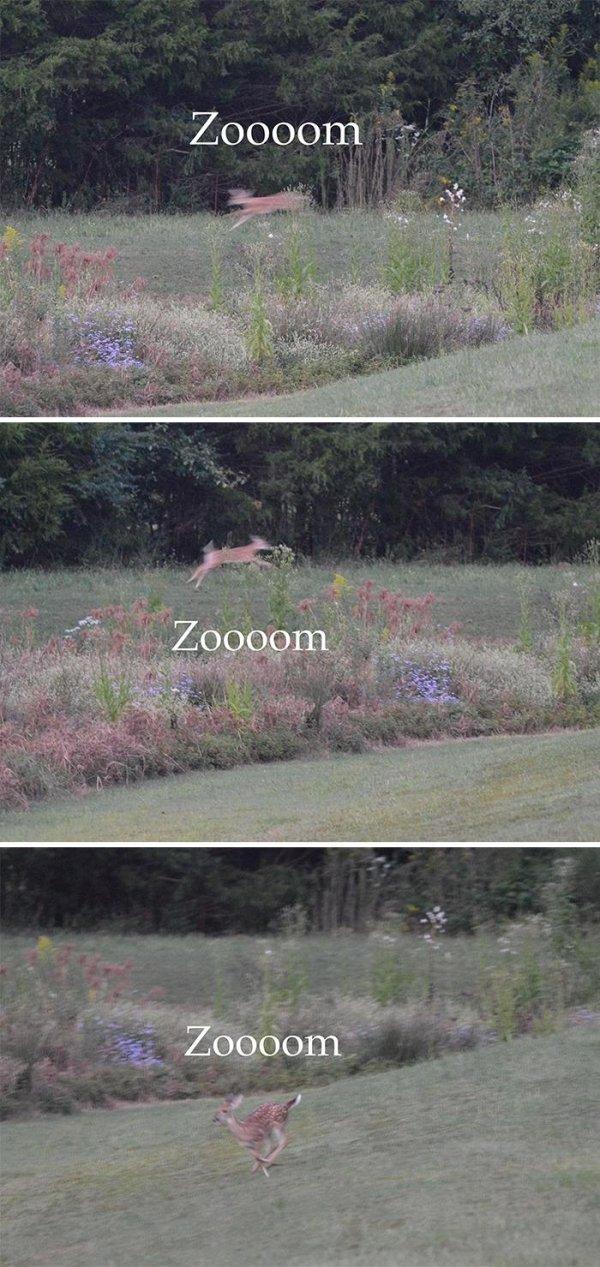 Funny Wildlife Photography (35 pics)
