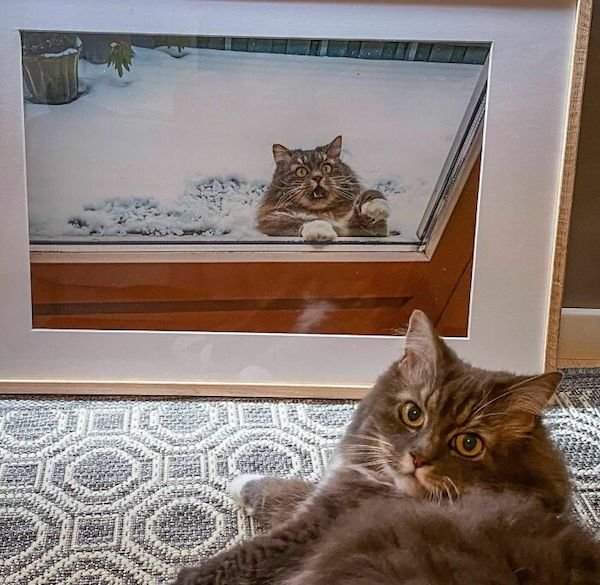 Funny Animals (34 pics)