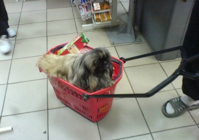 Things That May Impress You In Supermarkets (16 pics)