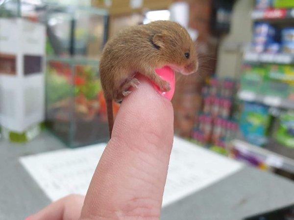 Cute Tiny Animals (30 pics)