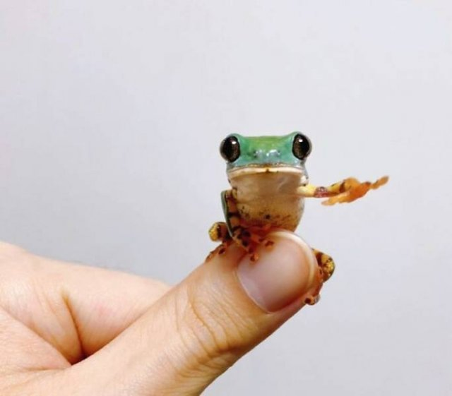 Small And Cute Animals (50 pics)