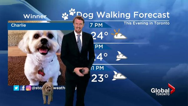 When Dog Rocks The Weather Forecast (20 pics)