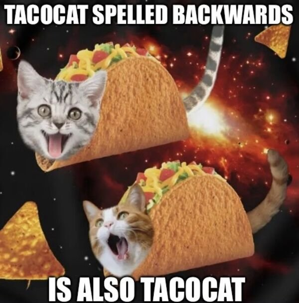 Cats Memes And Pictures (30 pics)