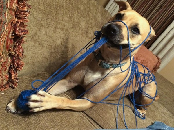 Funny Dogs (34 pics)