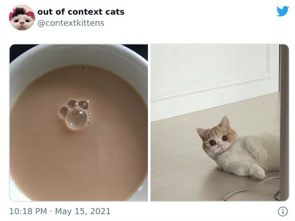 Out Of Context Cats (30 pics)