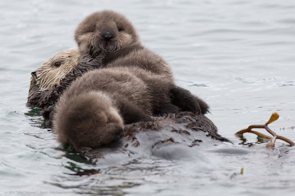 Baby Animal Facts (22 pics)