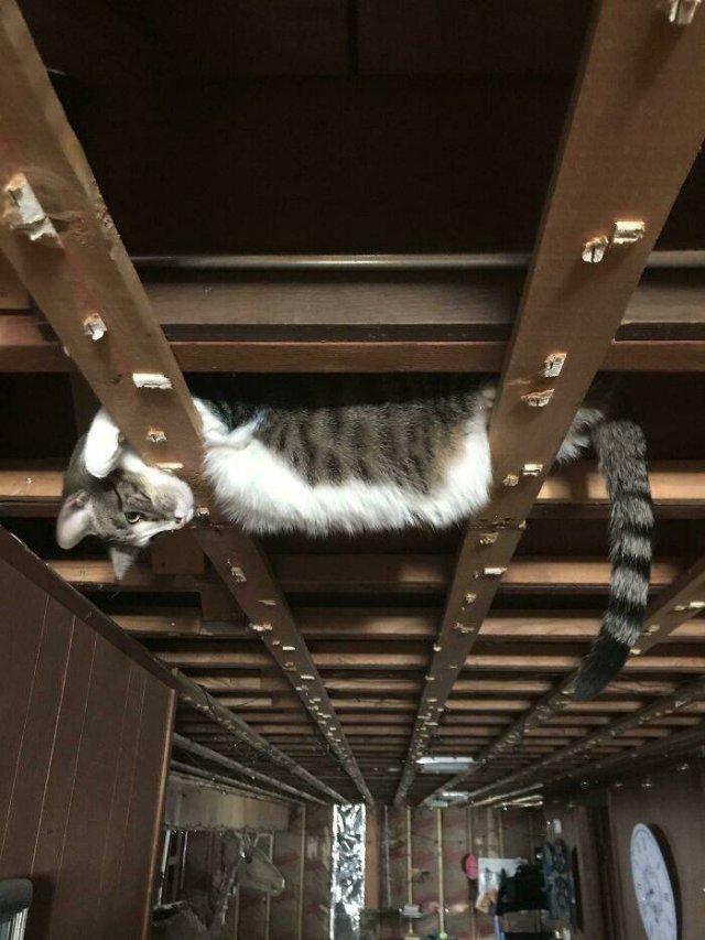 Hilarious Cats (49 pics)
