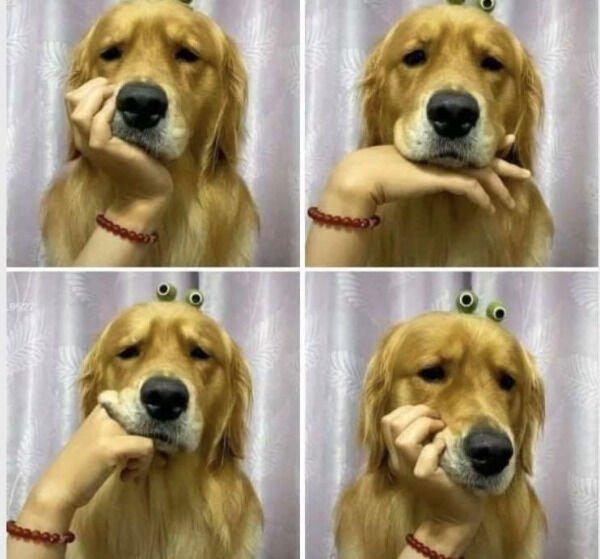 Funny Animals (58 pics)