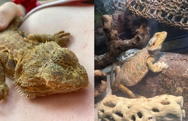 Animals Before And After Adoption (31 pics)