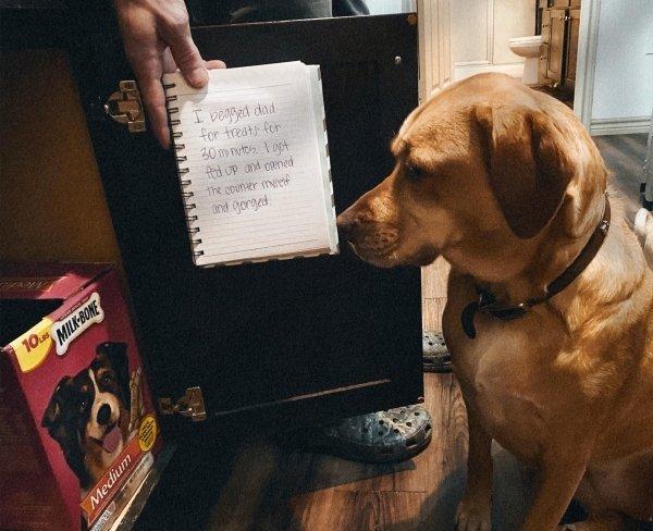 Pet Shaming (33 pics)