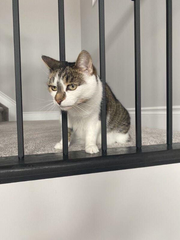 Hilarious Cats (29 pics)