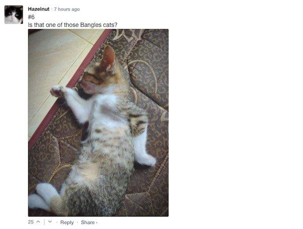 Funny Comments (67 pics)