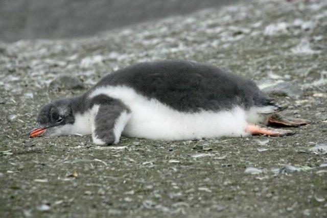Animal Facts (40 pics)