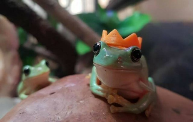 Cute Frogs (48 pics)