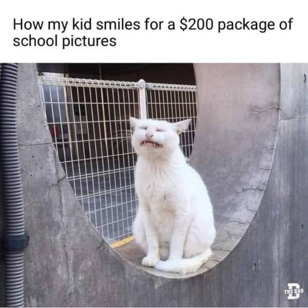 Random Funny Memes (42 pics)