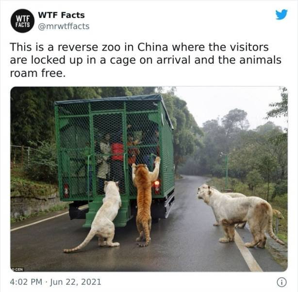 Interesting Facts (36 pics)