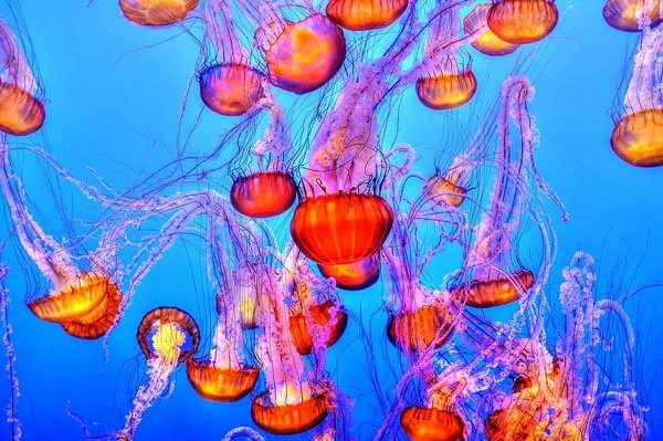 Jellyfish Facts (15 pics)
