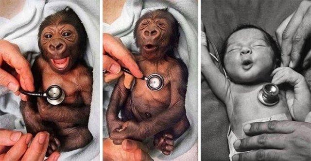 Baby Animal Photos (50 pics)