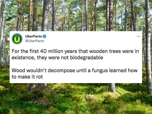 Intriguing Facts (30 pics)