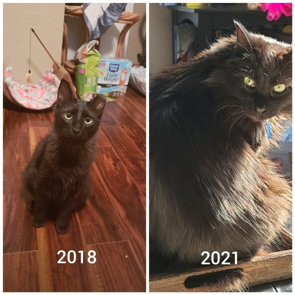 Pets Before And After Adoption (15 pics)