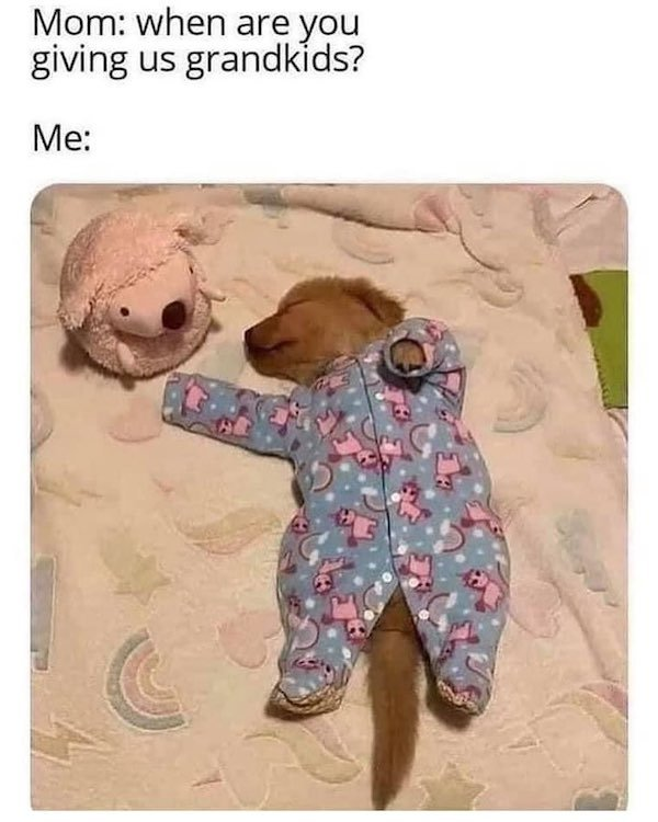 Dog Memes (33 pics)