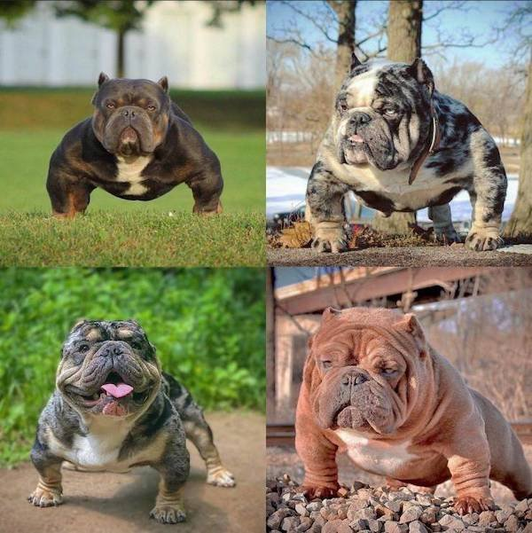 Cute Animals (52 pics)
