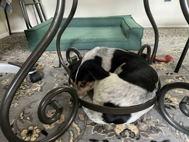 These Dogs Are Broken (50 pics)