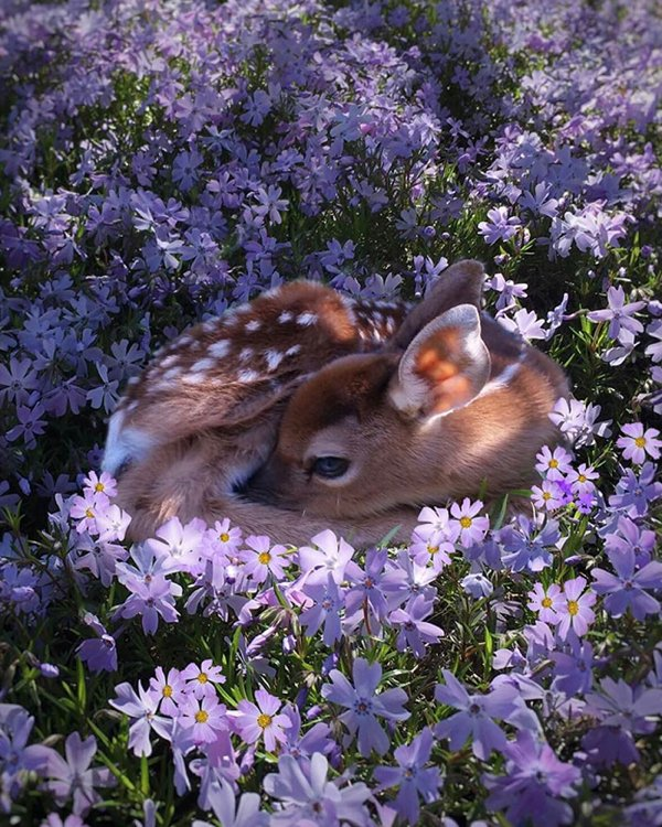 Baby Animals (33 pics)