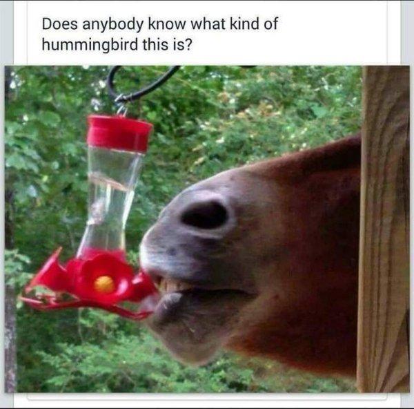 Random Funny Memes (28 pics)
