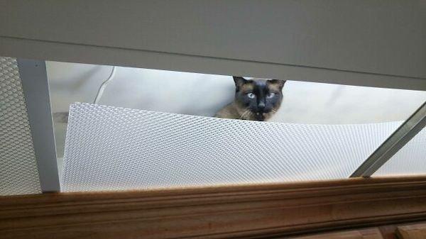 Ceiling Cats (30 pics)