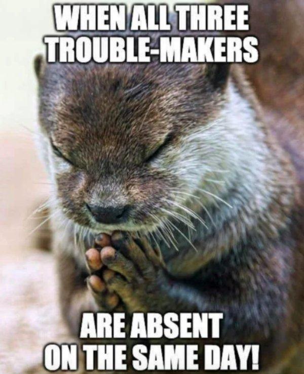 Memes For Teachers (27 pics)
