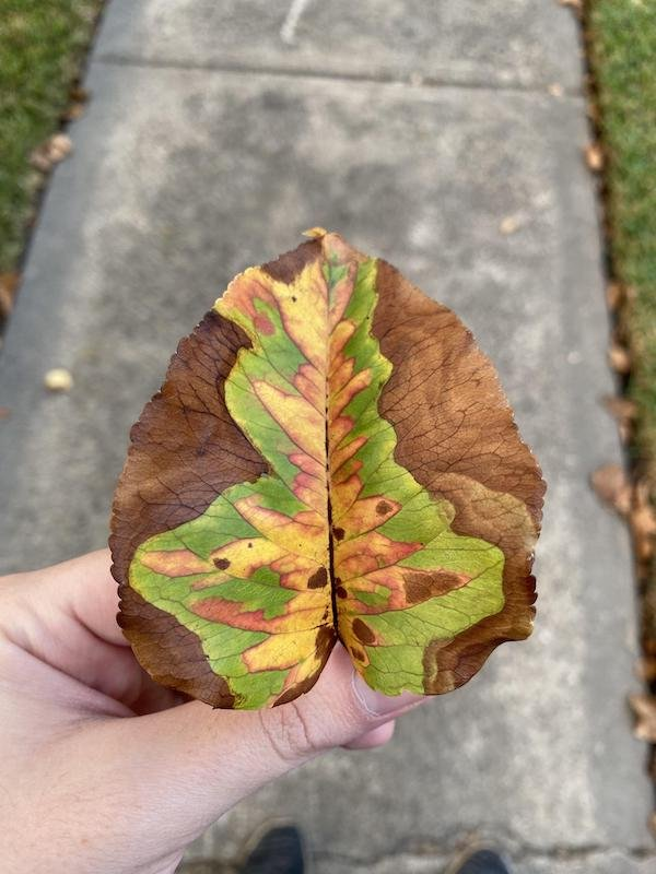 Nature Is Beautiful (20 pics)