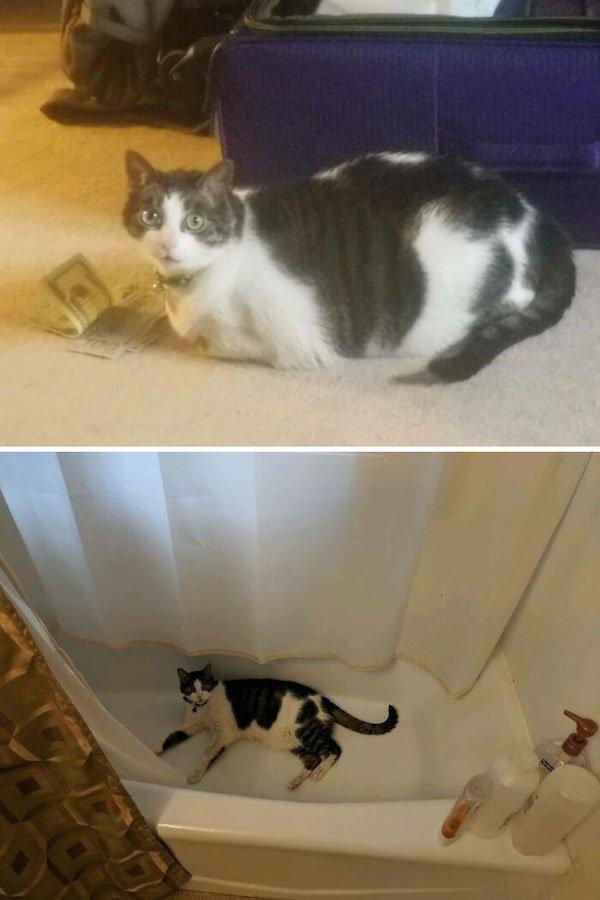 Pets Losing Weight (33 pics)
