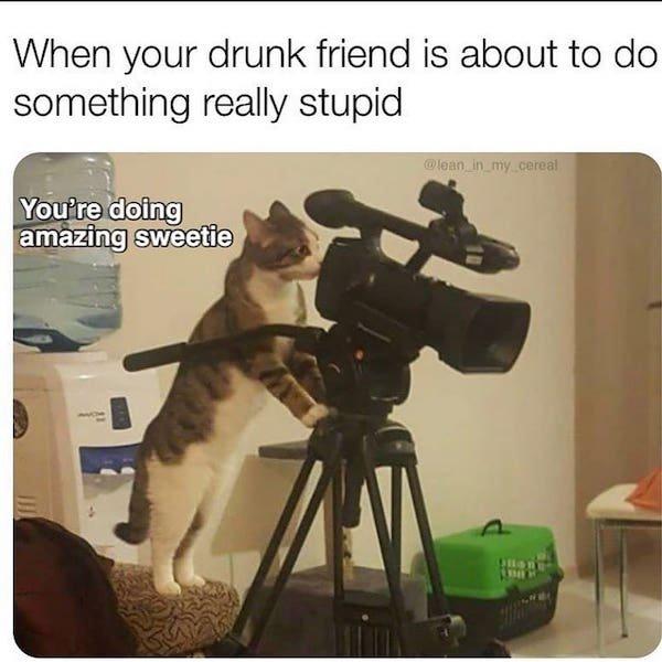Cat Memes (35 pics)