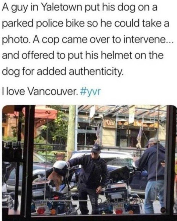 Wholesome Stories (34 pics)