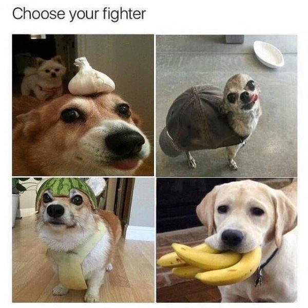 Cute Dogs (39 pics)