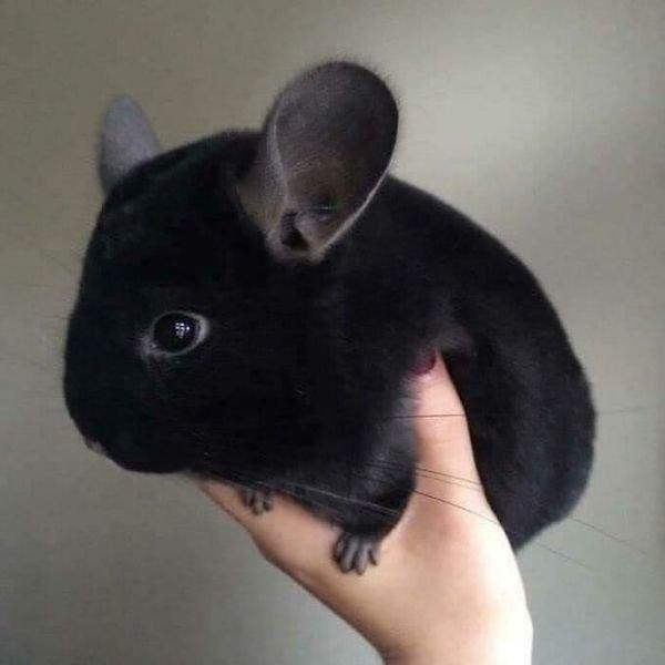 Cute Animals (36 pics)