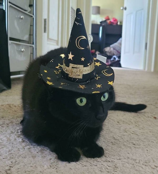 Halloween Costumes For Pets (45 pics)