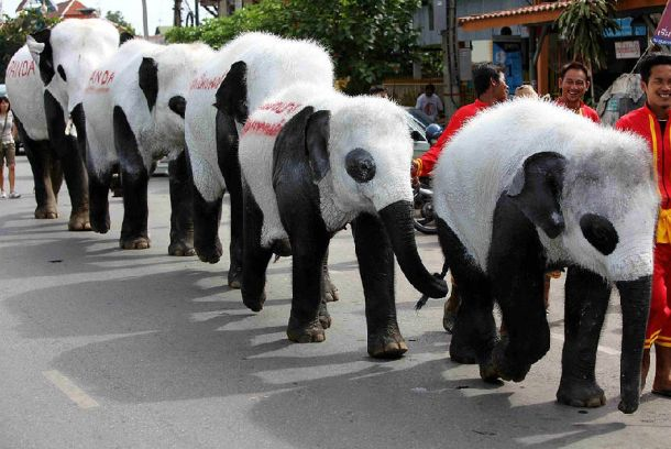Elephant? Panda? What is this? (11 pics)