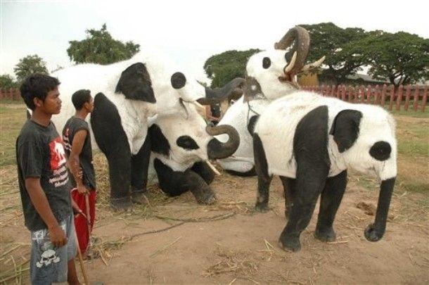 Elephant? Panda? What is this? (11 pics)