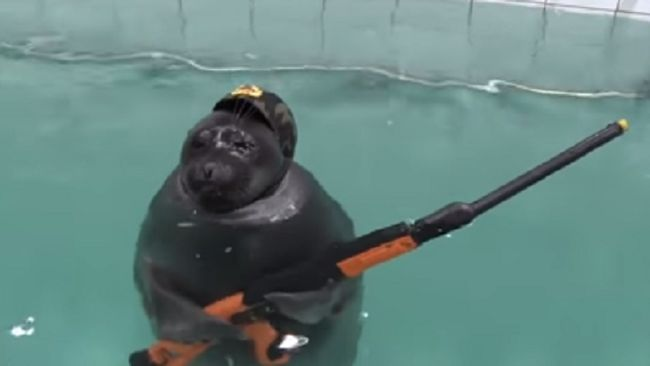 We Found Some Real Navy Seals In Training