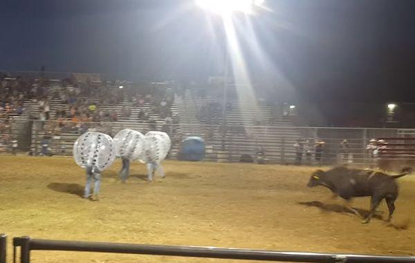 Bulls VS Knockerballs