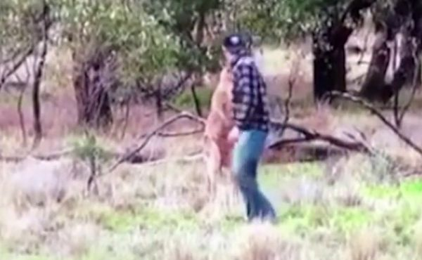 Guy Punches Kangaroo To Save His Dog From Being Strangled