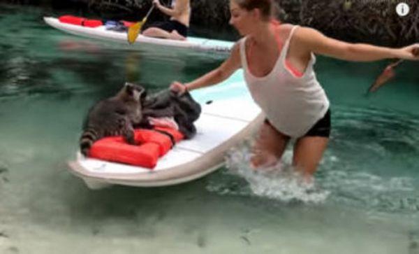 Instagram Hottie Janna Breslin VS Raccoon